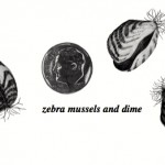 Lake Watch: Each of us plays role in keeping Zebra Mussels out