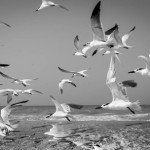 "Photo of the Month - ""Gulls"" by Dieter Kinner"