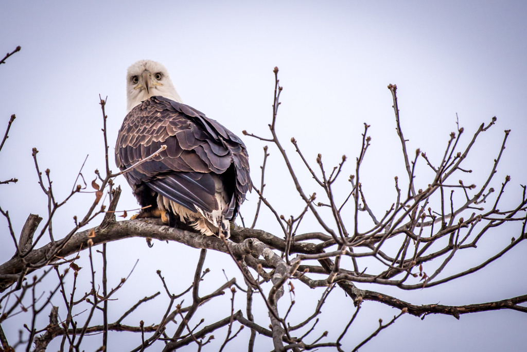 0216 eagle by dieter 2