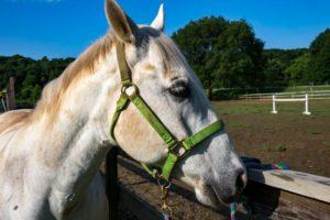 0816 ponies white horse by dan witt