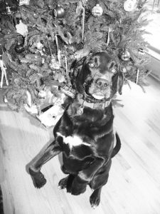 Frank was hoping for a holiday treat when he struck this pose in front of our Christmas tree.